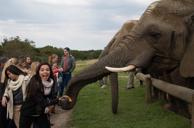 Yes, they really did see elephants!